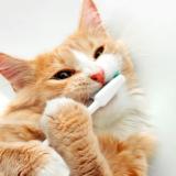 猫も歯磨きが必要‼その方法とコツを紹介