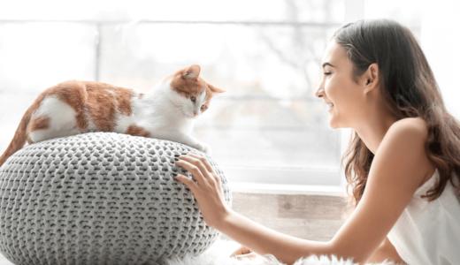 渋谷近辺の人気猫カフェ3選!カップルや友達と気軽に訪れよう
