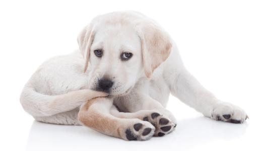 犬に牛乳を与えてもいいの?安心して与えられるおすすめ商品3選