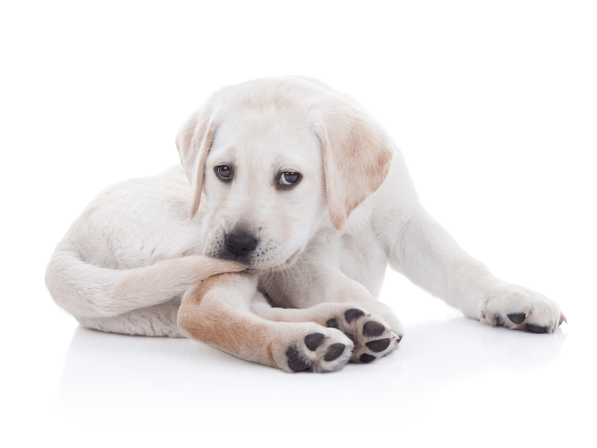 犬に牛乳を与えてもいいの?安心して与えられるミルクとはどんなもの?
