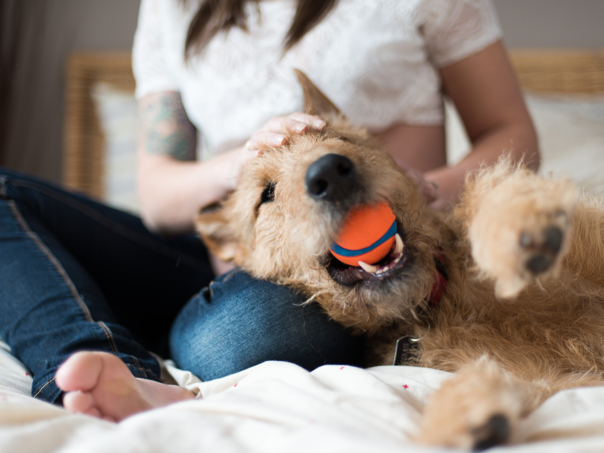 犬のブラッシング効果と仕方について
