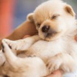 犬の出産時期に準備しておきたい5つのこと!お産の兆候や期間・妊娠中のケア方法をチェック