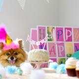 可愛い愛犬にケーキをあげよう!東京にある犬用ケーキ販売店5選