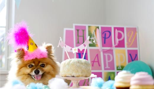 東京にある犬用ケーキ販売店5選!可愛い愛犬の誕生日や記念日に最適な駅近店舗などをご紹介