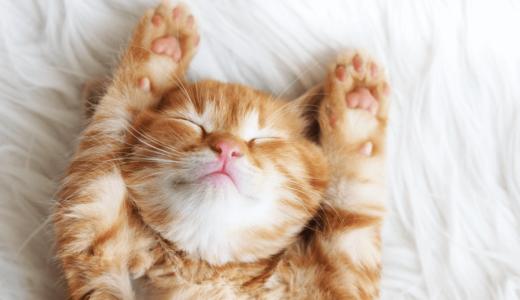 猫はなぜこたつが好きなの?危険度を高める6つのケースと気の配り方