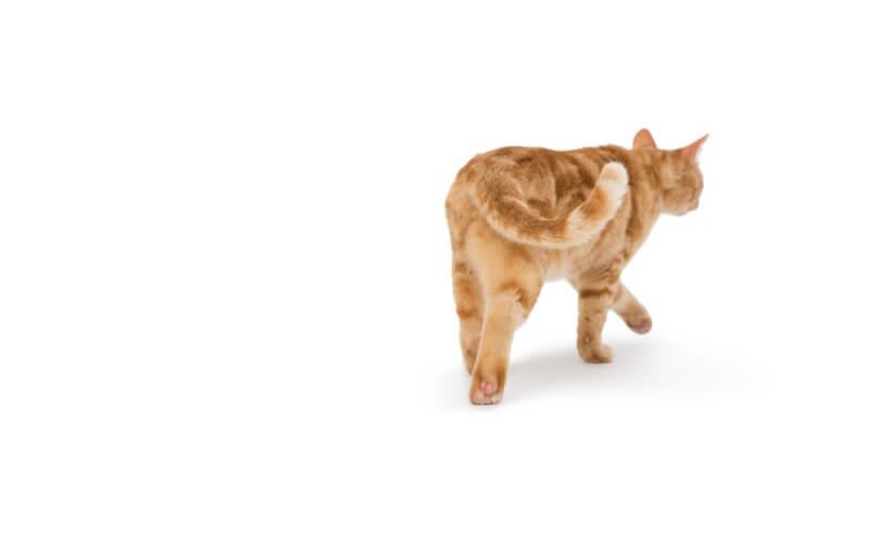 猫の鳴き声で猫の気持ちがわかる?状況別に違う猫の鳴き声
