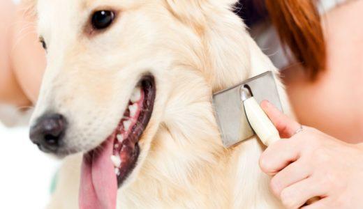 犬の脱毛で考えられる原因は?予防・対策を練って快適な環境を与えてあげよう!