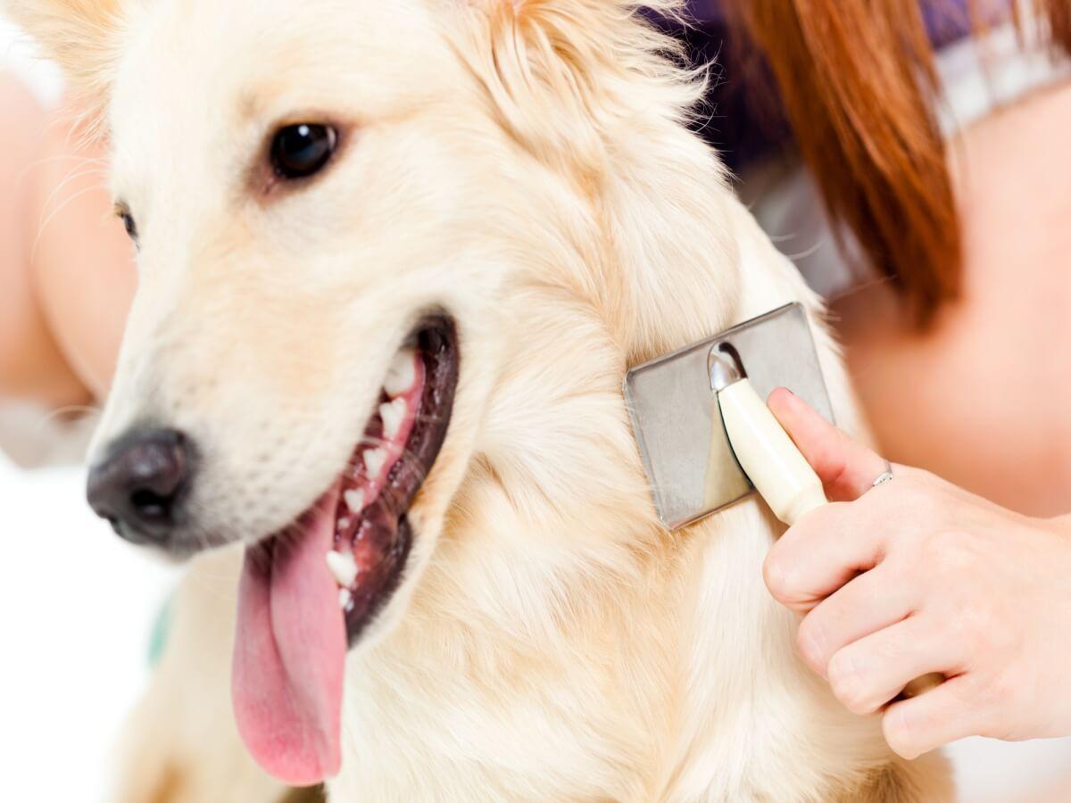 犬の脱毛 考えられる原因と予防・対策を知っておこう