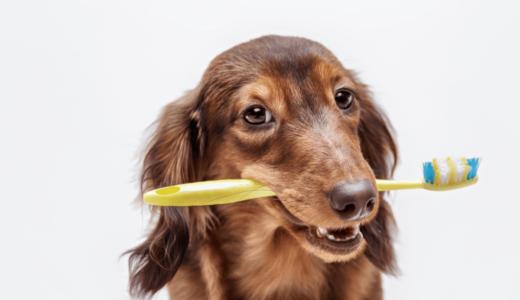 犬の歯磨きって必要!?磨く頻度や嫌がらない方法を徹底解説