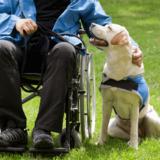 補助犬ってどんな犬?障害のある人にとってかけがえのないパートナー