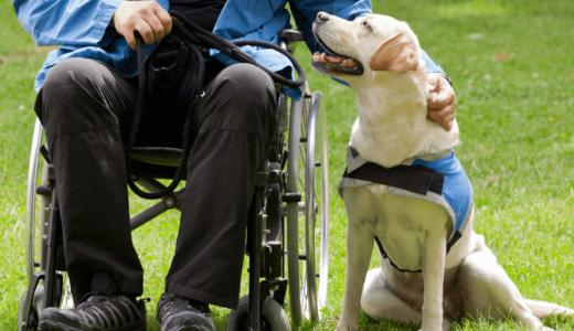 補助犬ってどの犬種でもなれる?かけがえのないパートナーとして活躍するために必要なこと