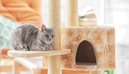 猫にキャットタワーは必要?選ぶときの7つのポイント