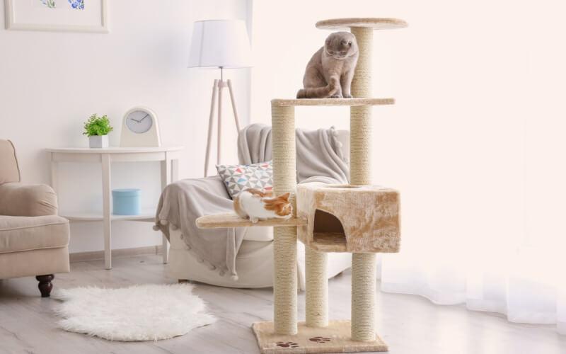 猫にはキャットタワーは必要なの?キャットタワーを選ぶときの7つのポイント