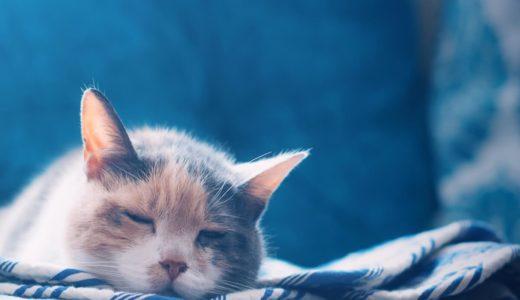 猫の睡眠時間はなぜ長いの?質の良い眠りをとらせるためにできる5つのこと