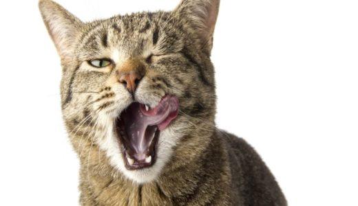 猫の鳴き声で気持ちがわかる?状況別に異なる様子について把握しておこう!