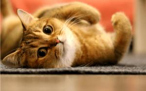 猫はなんでこたつが好きなの?実はこたつは猫にとって危険がいっぱい