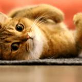 吉祥寺で人気の猫カフェが知りたい!カップルや子連れにもおすすめ