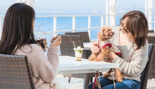 ペット連れで淡路島観光に行くならぜひ活用したい!「North Awaji Pet Card」が7月より提供開始