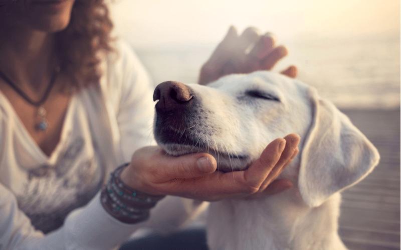 犬が柑橘類を食べても大丈夫!柑橘類の効果と、与える際の注意点3つ