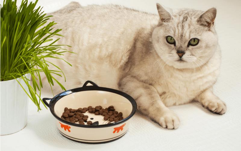 カナガン 猫