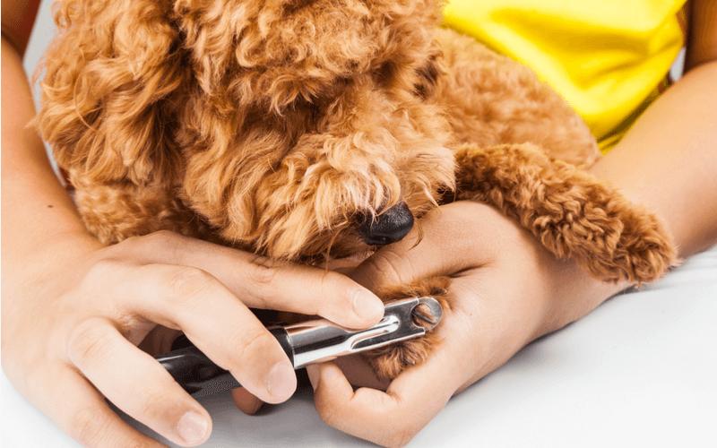 犬のトリミングは必要?気になる費用や頻度とは。自宅でもトリミングできる方法をご紹介
