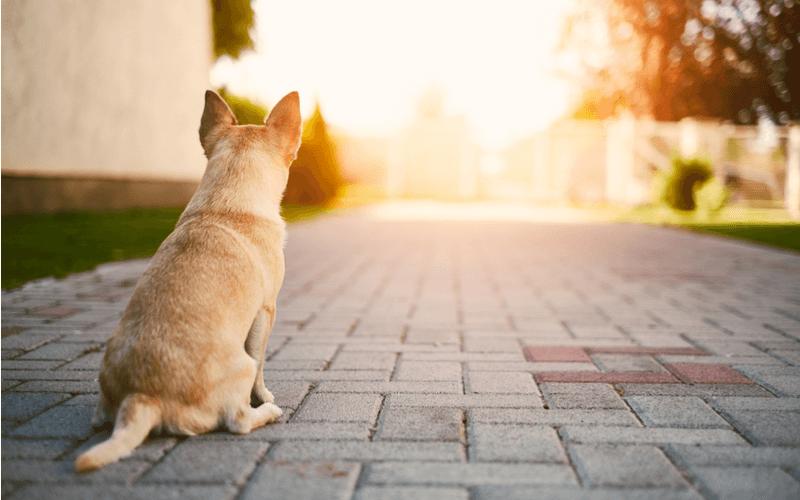 愛犬がドックフードを食べない!考えられる理由と対策方法7選
