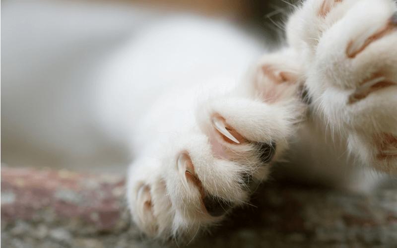 猫にアイスは危険?あげないほうがいい理由と知っておきたい注意点