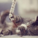 猫と遊びたい!猫のおもちゃを選ぶポイントと遊び方7選