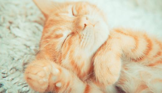 子猫の飼い方で肝心なのはしつけ?準備しておきたいものおすすめ商品14選!