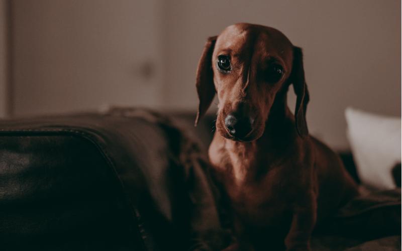 マンションで犬を飼いたい!注意点とおすすめ犬種は?