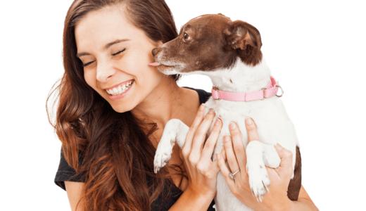 犬に癒しを求めよう!人間の心身を健康にする特効薬はスキンシップを取ること