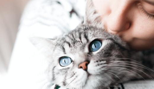 猫の癒し効果3選!ふれあい・画像・動画を見ることが心に余裕ができる根本となる!?