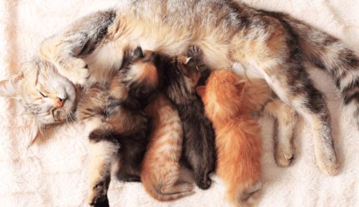 猫の出産の時期・場所・時間は?安心して出産するために飼い主ができる7つのこと