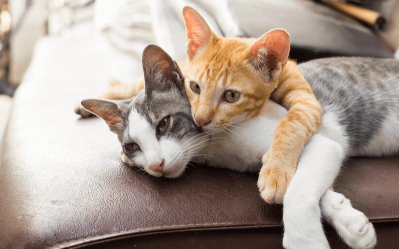 猫の出産の時期、場所、時間は?猫が安心して出産するために飼い主ができること