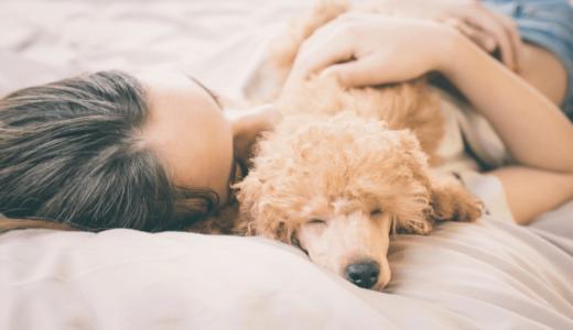 犬と一緒に寝ると幸せな心理効果がある?事前にしつけをしておくと安心して睡眠がとれる!