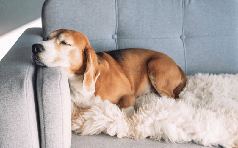 愛犬と一緒に寝るのはだめ?犬と一緒に寝るメリットとデメリット