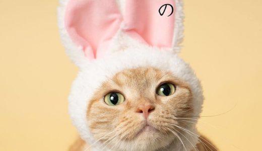 メガヒット人気ガチャ「ねこのかぶりもの」シリーズから初の猫写真集が登場!8月1日発売開始