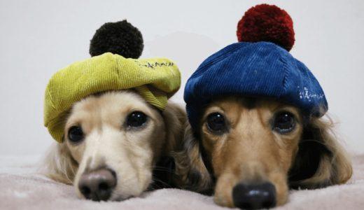 犬の帽子おすすめ6選!種類や効果・大事な役割が知りたい