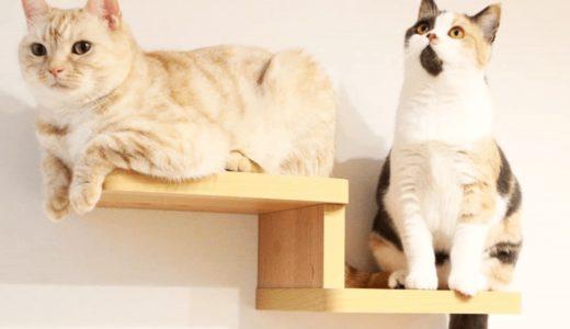 家猫はストレスが多い?快適な環境作りとストレスケア方法をご紹介
