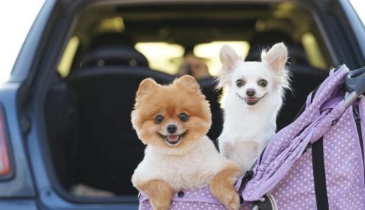 ドッグランのあるサービスエリア【12選】をエリア別にご紹介!愛犬を連れてお出掛けしよう!