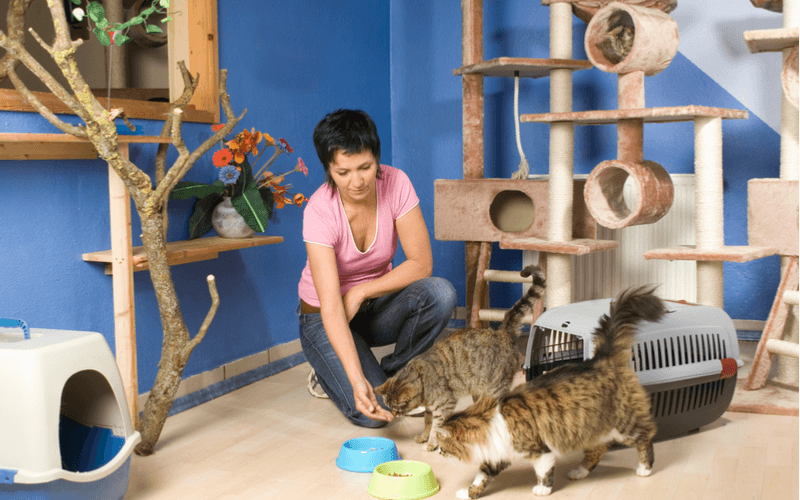 猫の保護施設 保護施設で行っていることはどんなこと?