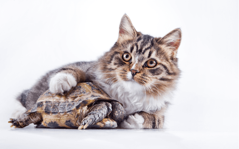 長生きするペットってなんだろう?長く共に暮らせる寿命の長いペットをご紹介します。