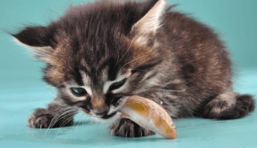 猫が飼い主さんにおみやげを持ってくる理由は?その意味と正しい2つの対処法