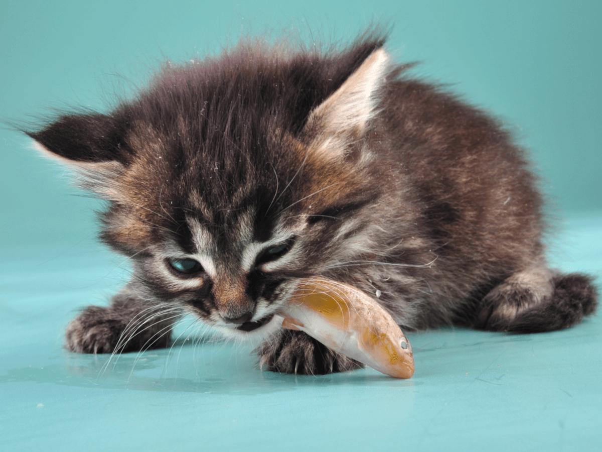猫が飼い主さんにおみやげを持ってくるのはなぜ?その理由を知ったらますます愛猫が可愛くなるはず!