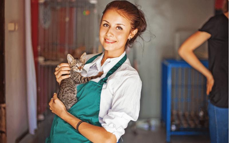 猫の殺処分を考える 殺処分はなぜなくならないのかなくすために何ができるのか