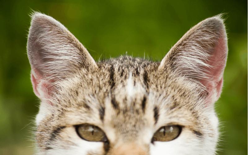 猫が威嚇する時の行動や原因はどんなもの? 猫の威嚇に対して飼い主さんができること