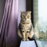 家猫はストレスが多い?家で猫を飼うための快適な環境の作りとストレスケア方法をご紹介