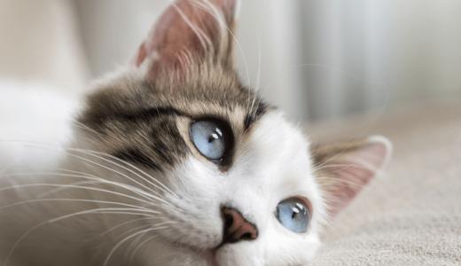 猫が便秘で元気がない!その原因と症状・今すぐできる6個の対策