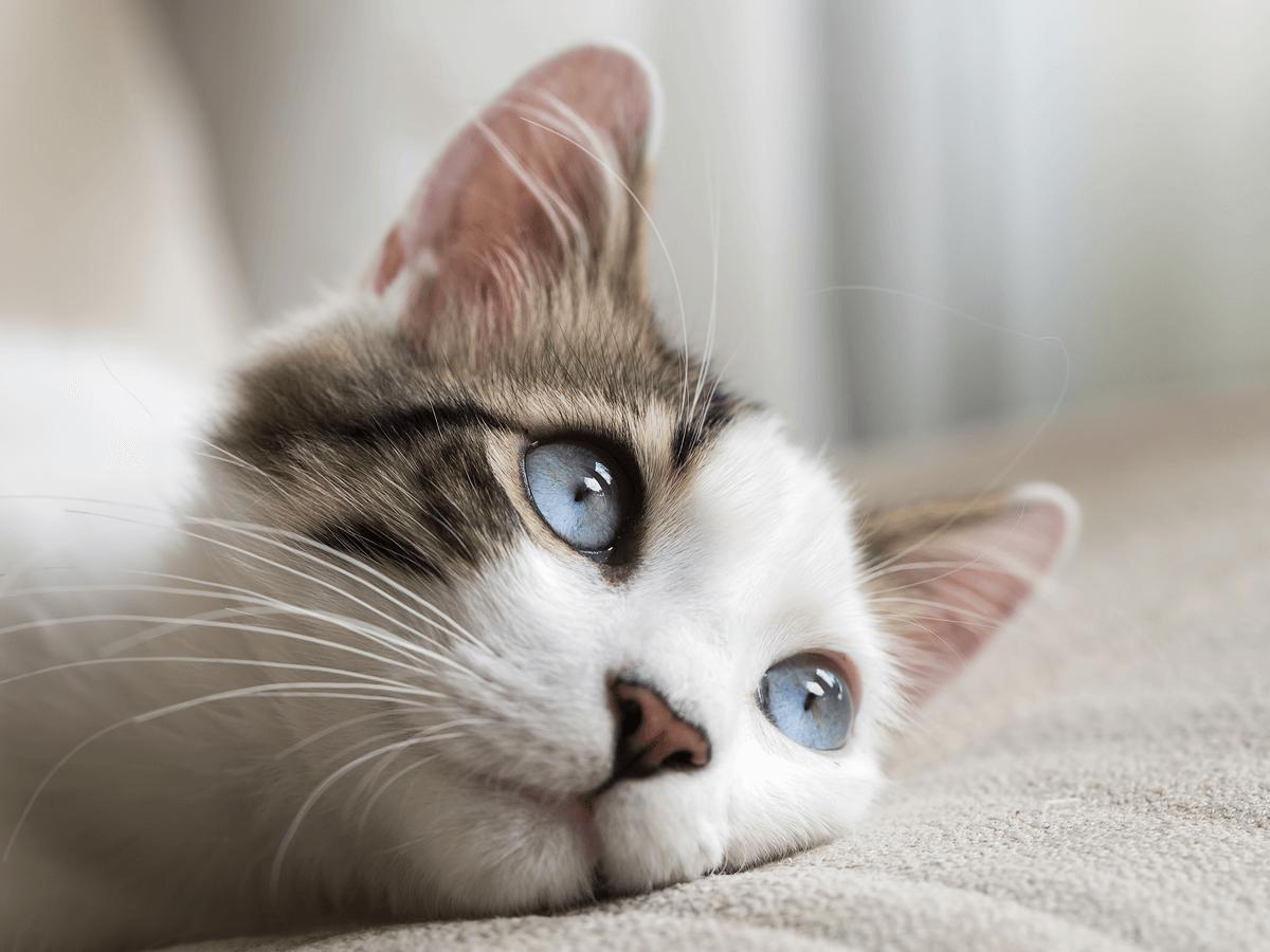 猫がウンチが出なくて元気がない 便秘の原因と対処方法 2018/08/09