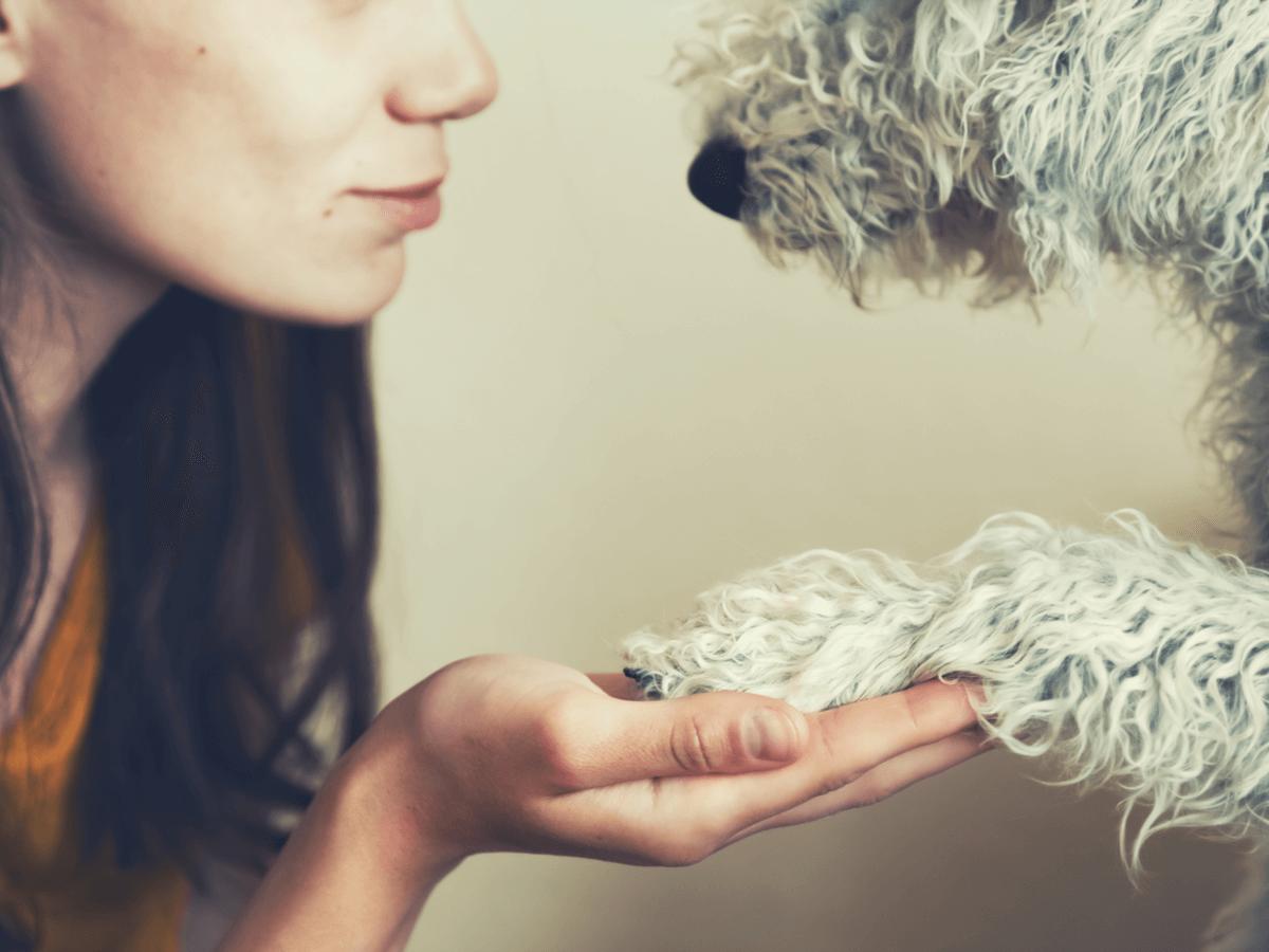 犬のワクチン接種時期や費用、狂犬病などから守りたい!